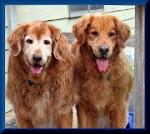 Toby & Bubba