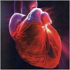 Cientistas descobrem método genético para regenerar coração