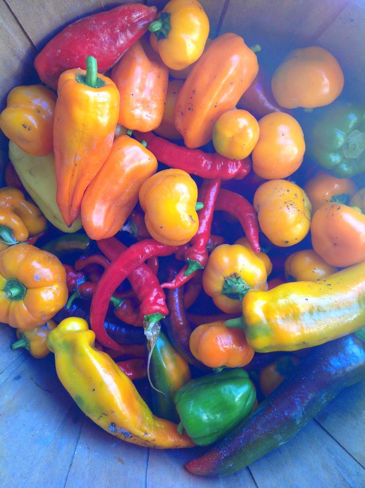 Chez Nous Farms- Certified Organic in Niagara: Looking ahead to 2018