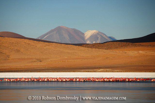 laguna boliviana com flamingos