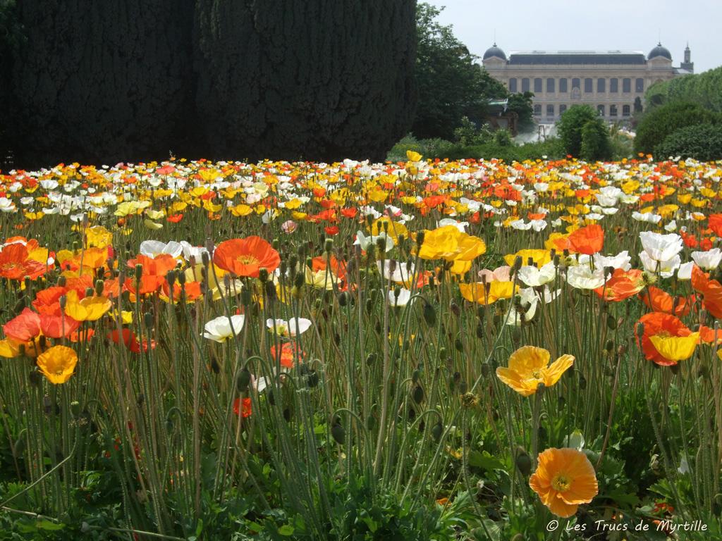 Les trucs de myrtille les pavots du jardin des plantes for Le jardin des fleurs