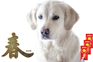 Year of the Dog: Are you ready to adopt a dog or other pet?