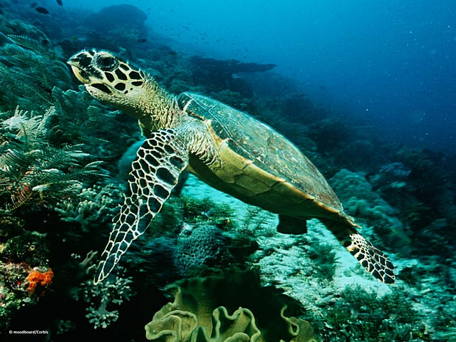25 best images about Sea Animals on Pinterest