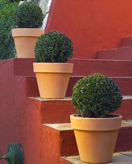 Riego de las Plantas