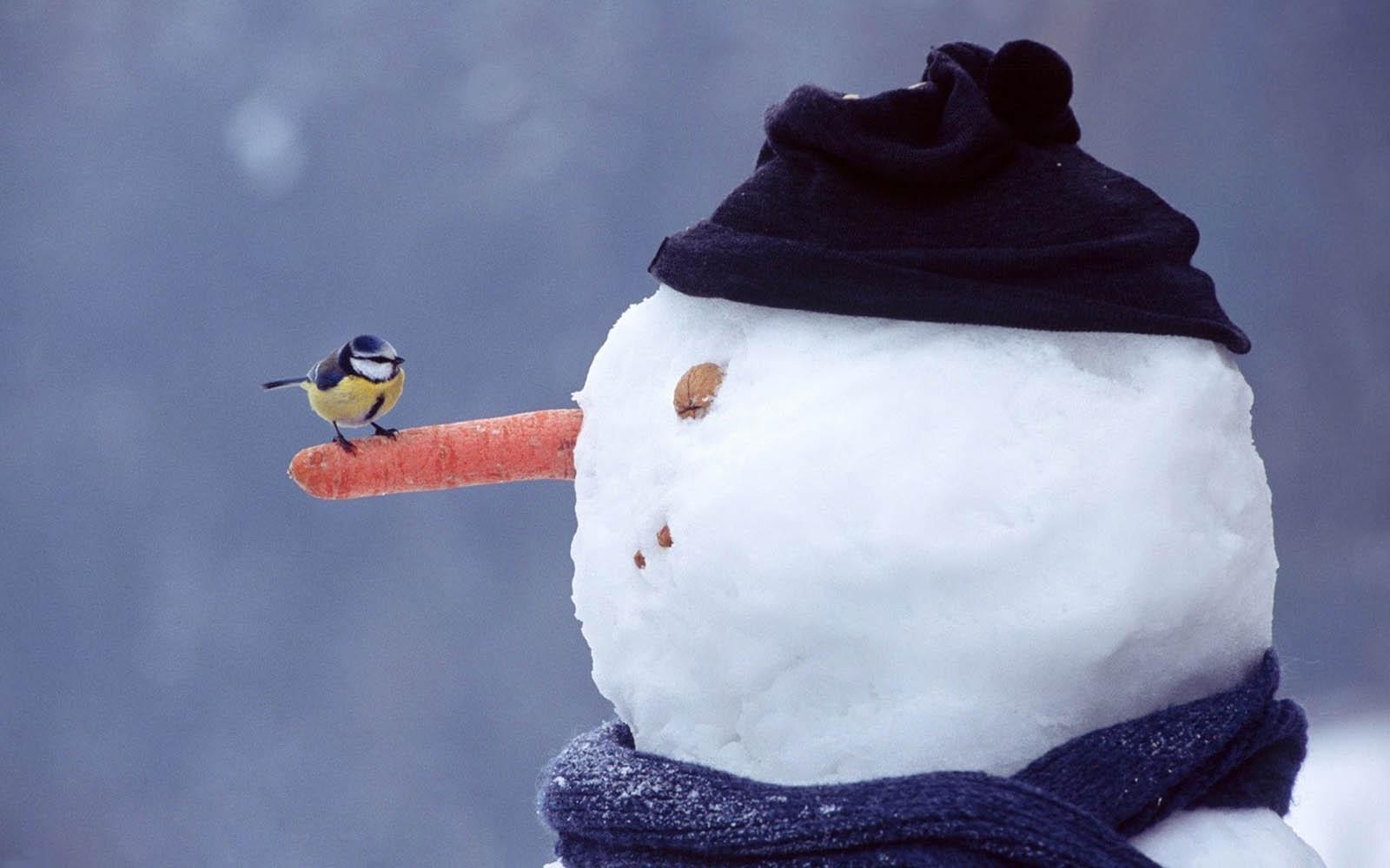 watching the Snowman Wallpapers, Snowman DesktopWallpapers, Snowman ...