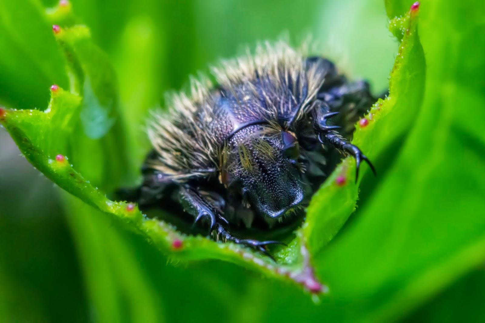 Fotos macro y de aproximación de insectos y naturaleza