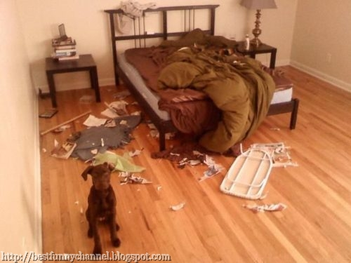 Funny pets behaving badly 8