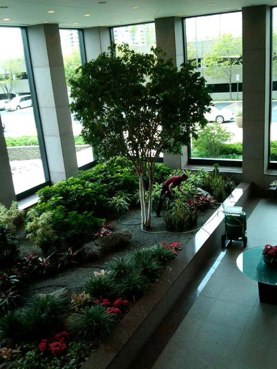 Beautiful interior office plants from Phillips Home Decorating Cheap