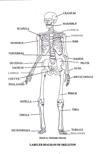Kid Science At Home  Singing And Dancing Bones