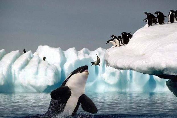 inan%25C4%25B1lmaz+hayvan+resimleri26 İnanılmaz hayvan resimleri vahşi hayat.