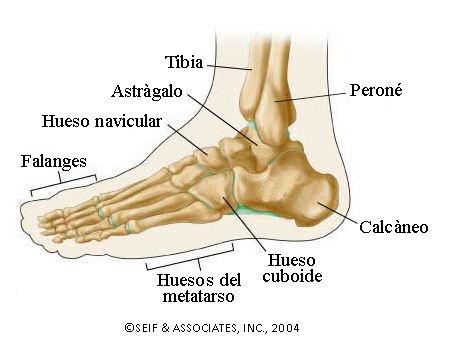 Fisioterapia SALAS : ESGUINCE DE TOBILLO