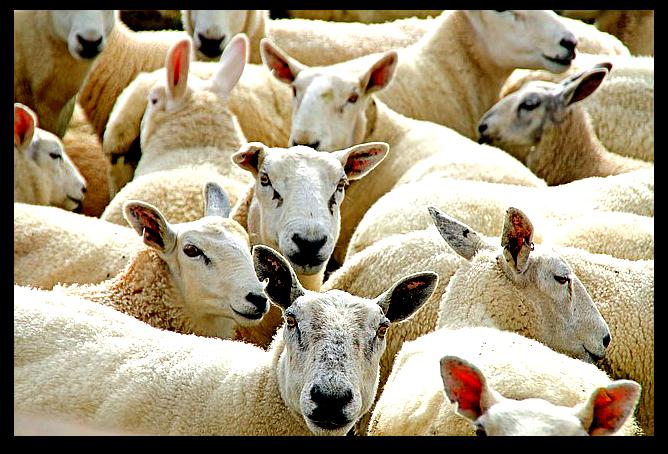 Fibre tessili naturali animali