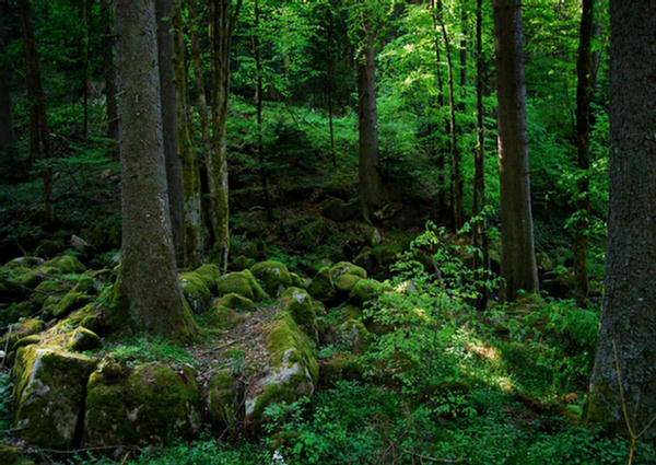 1001archives Destinations Amazing Black Forest Of Germany