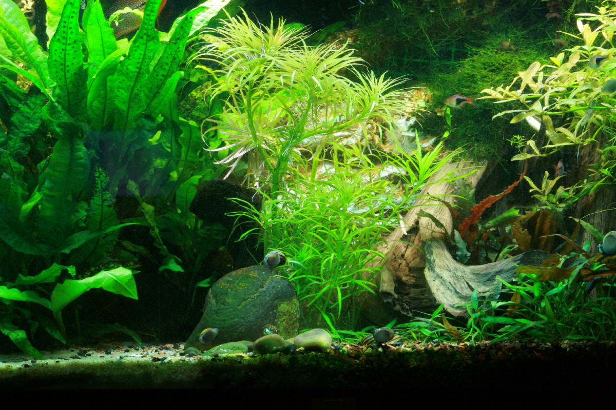Asian river biotope