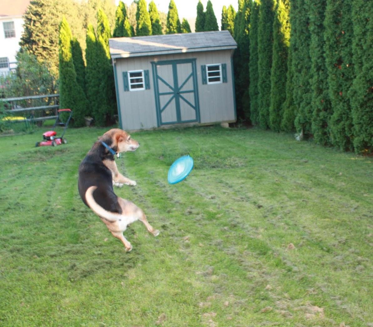 http://2.bp.blogspot.com/-s_gdXg2f1Ng/TlRG5hAAyfI/AAAAAAAAES4/2MU2XTdQOkM/s1600/angie+frisbee+flipping.jpg