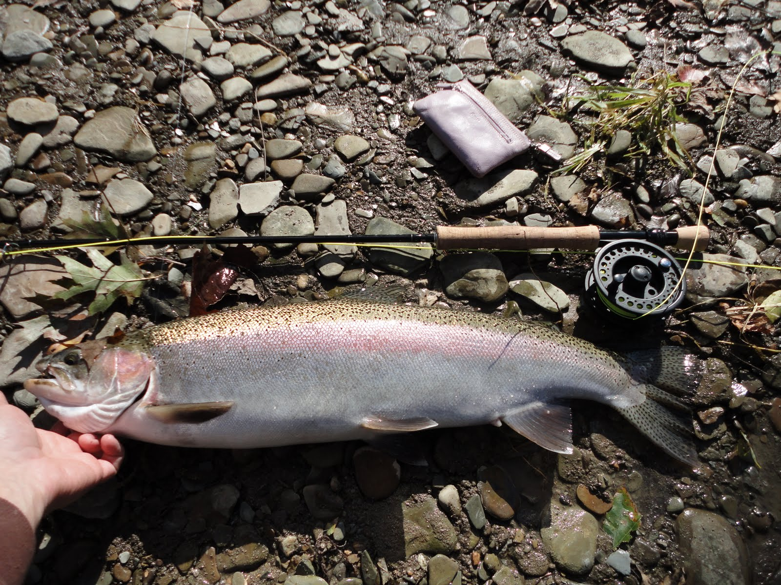 The slippery trout a fly fishing blog fishing book for Steelhead fishing pa