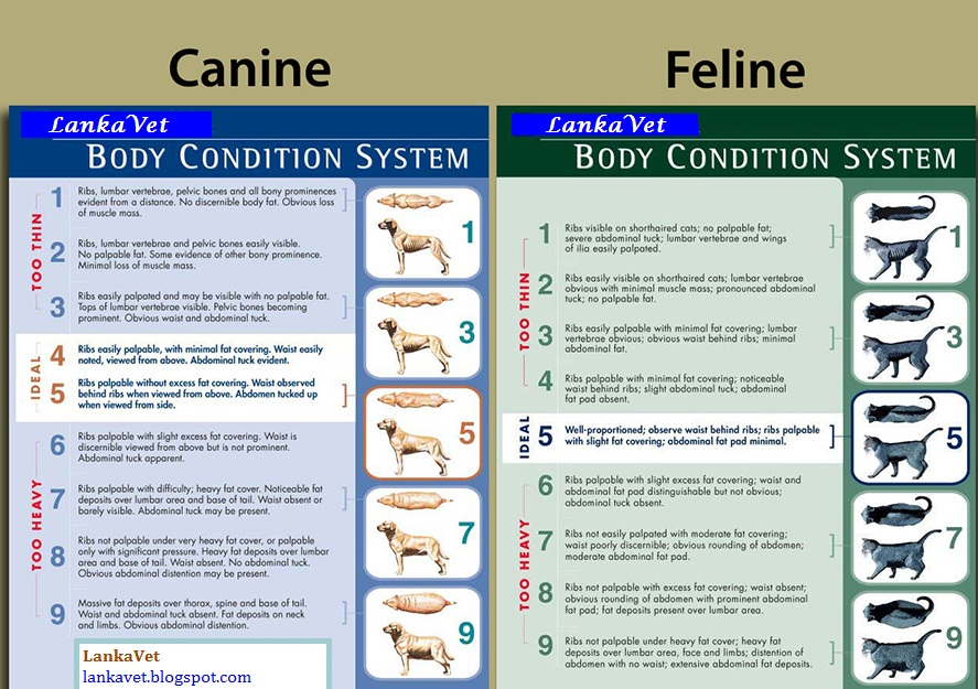 Dog Body Condition Score Body Condition Score Charts of