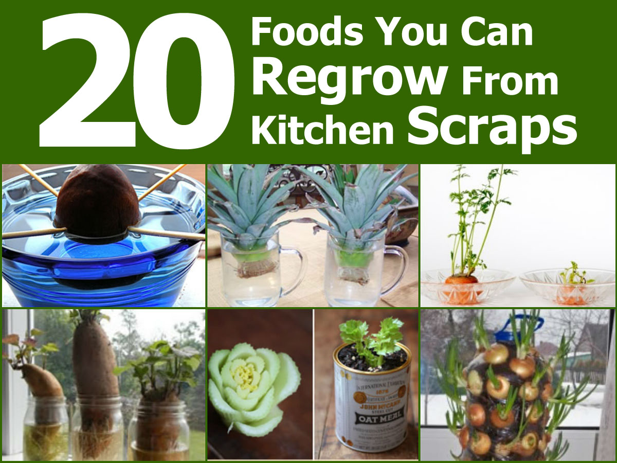 20 foods you can regrow from kitchen scraps idees and solutions