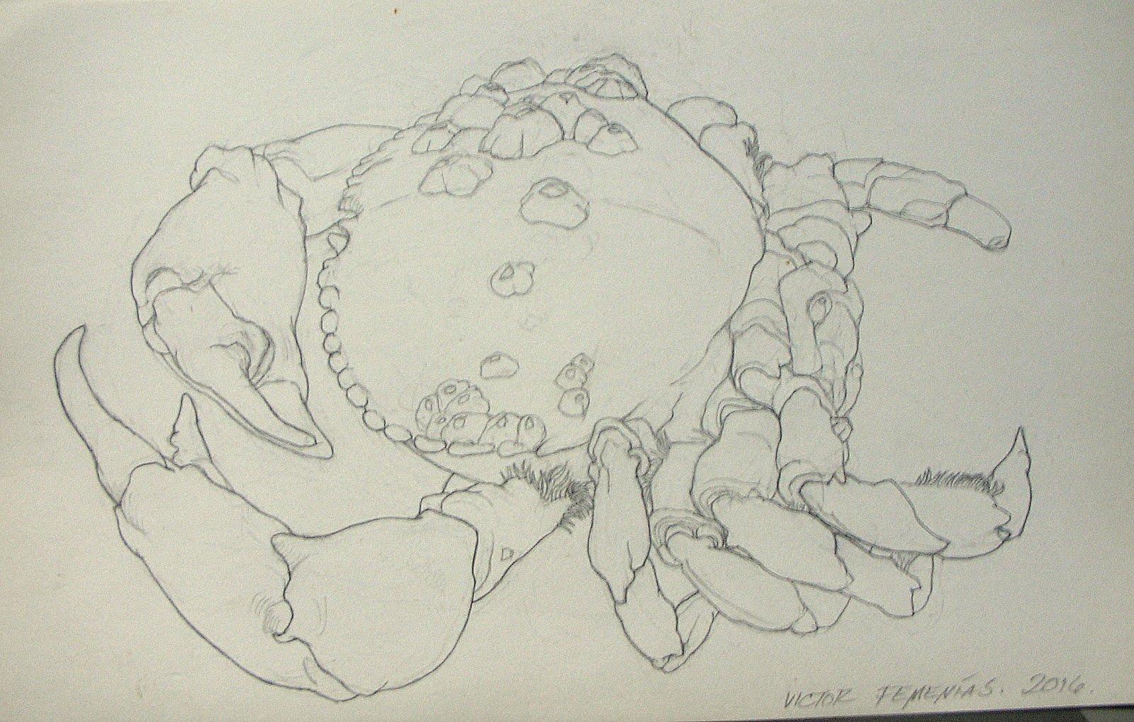 Estudio de cangrejo.