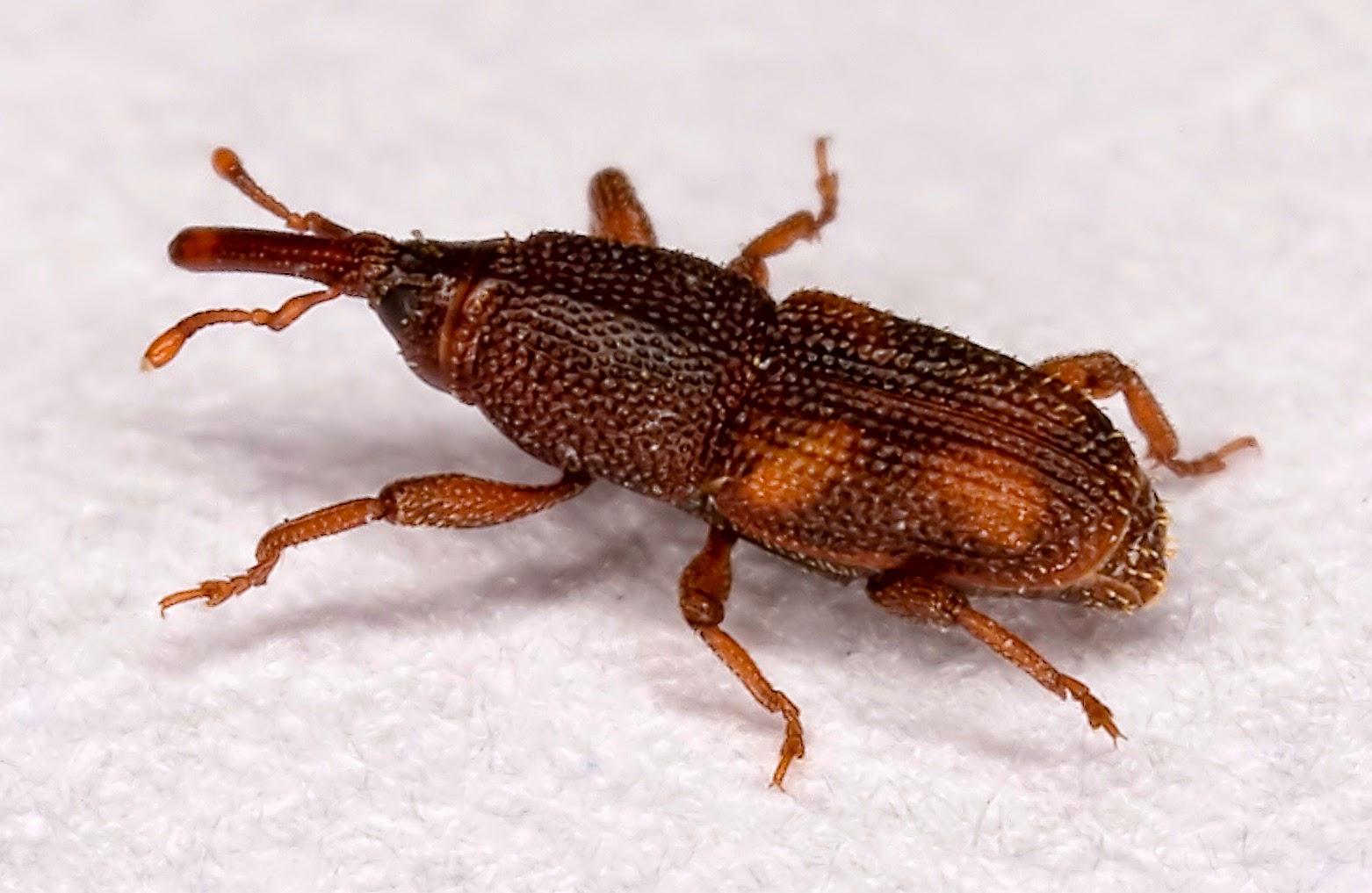 Karınca Neye Gelmez, Nasıl Gider Evdeki Karıncalardan Nasıl Kurtulunur 16