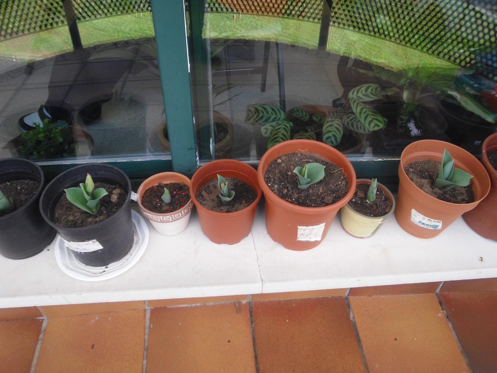 somoxnatura jard n bot nico y huerto escolar On jardin botanico escolar