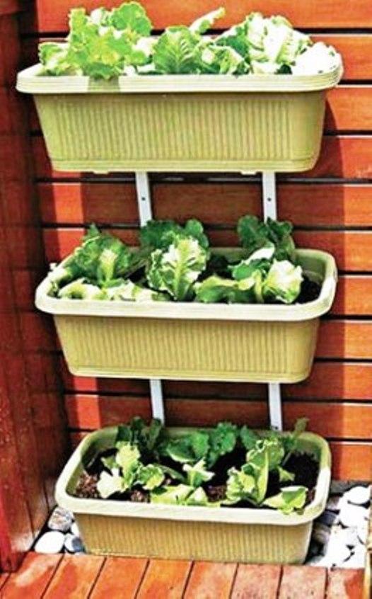 Cách trồng rau với kệ 3 tầng ốp tường