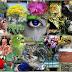 Líneas estratégicas de la Fundación Biodiversidad