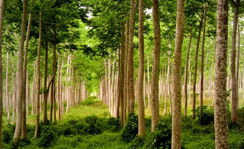 Recursos naturales estrategicos for Recurso clausula suelo