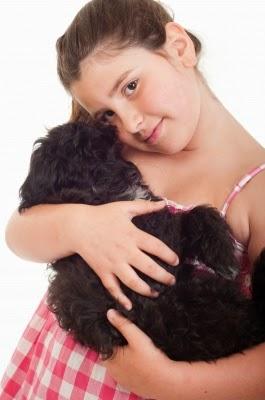 Cómo encontrar y comprar  tu perro o gato
