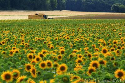 campagne champ tournesols moissonneuse été récolte essonne