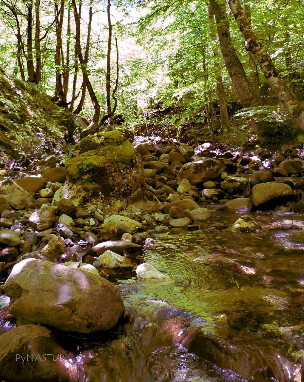Río de La Foiz Grande - Quirós - Asturias
