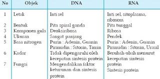 perbedaan dna dan rna dalam tabel,fungsi dna dan rna,persamaan dna dan rna,fungsi rna,struktur dna dan rna,struktur rna,sifat rna,perbedaan struktur dna dan rna,