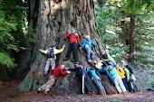Redwoods 2009