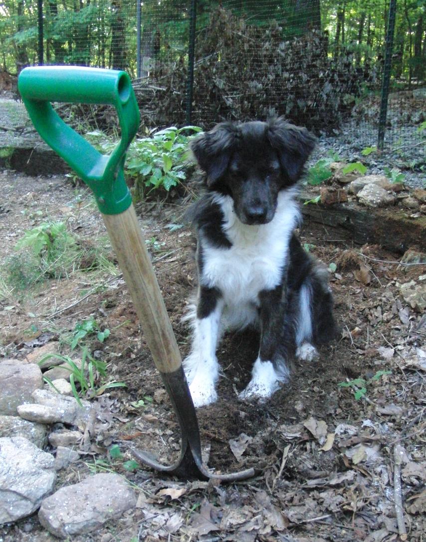 Stop Dog Digging In Garden