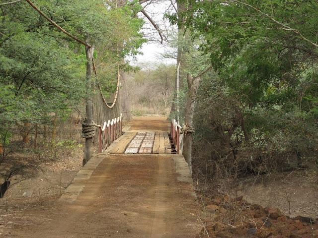 IMG_3261 ▷ La Reserva de Bandia y Accro Baobab Adventures