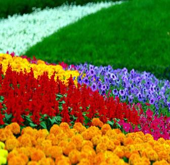 Fotos de Flores Colombianas (Cundinamarca, Colombia) - Fotos De Flores Colombianas