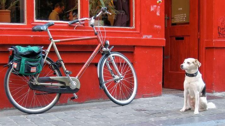 สุนัขกับจักรยาน