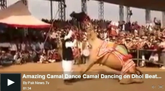http://funkidos.com/videos-collection/amazing-videos/amazing-camel-dance