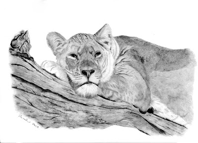 Lioness Resting, Big Cat, Feline, Wild Animal, Fine Art Drawing, Graphite Pencil, Original Art, Fine Art Prints, Greeting Cards
