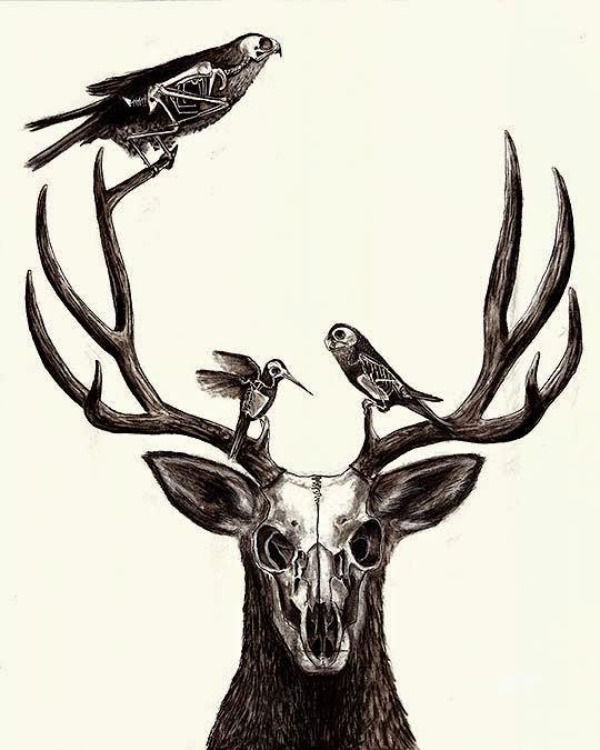 Ilustración. Ciervo de ANA BELLIDO aka Anaj