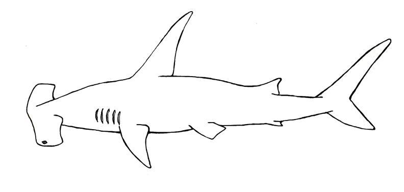 Animales para colorear: Tiburón martillo