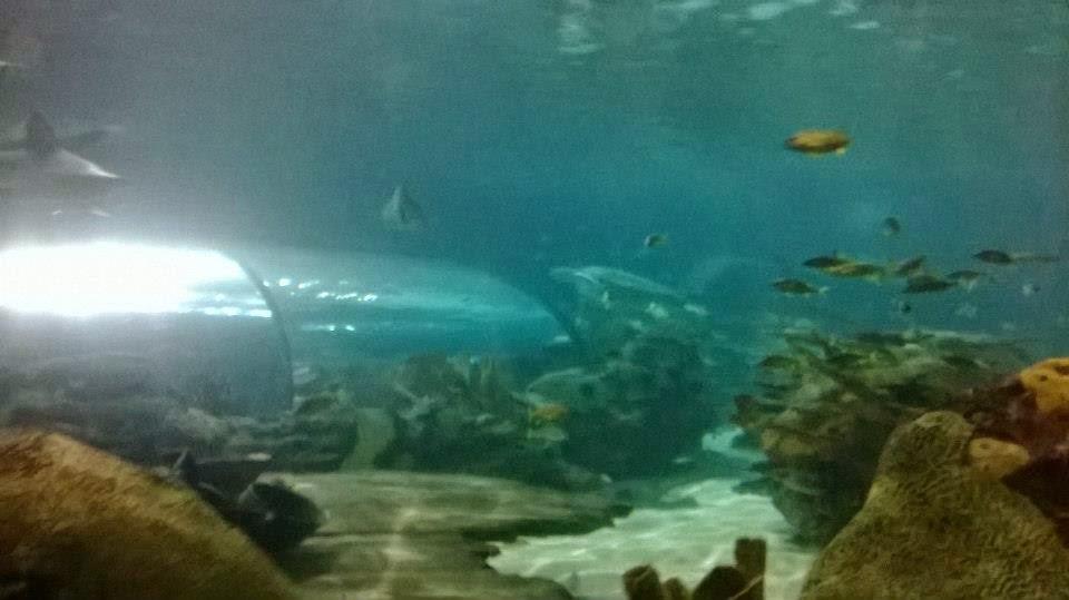 Themeparkmama Ripleys Aquarium Of The Smokies And More In