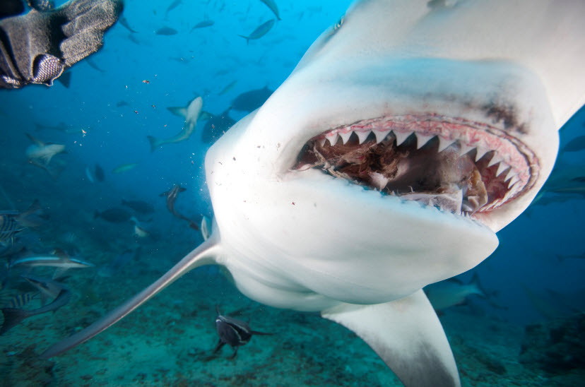 Animal you bull shark for Lake pontchartrain fish species