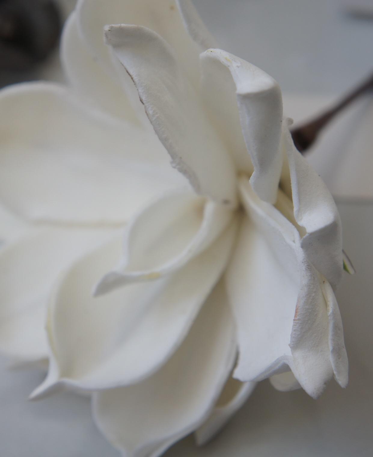 Tout blanc