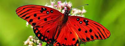 Couverture facebook j'aime les papillons