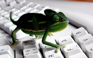 Keyboard Lizard HD Wallpaper