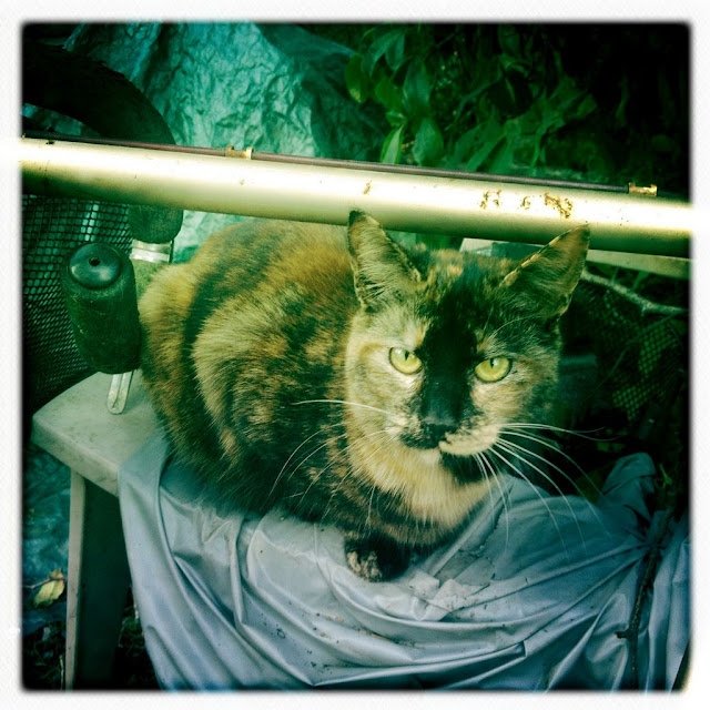 hipstamatic kitten photo, Georgia tortie