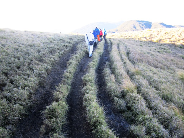 Mt. Pulag summit trail, Mt Pulag dwarf bamboo, mt pulag plants, mt pulag summi trail, mt pulag map, mt pulat itinerary, climbing mt pulag