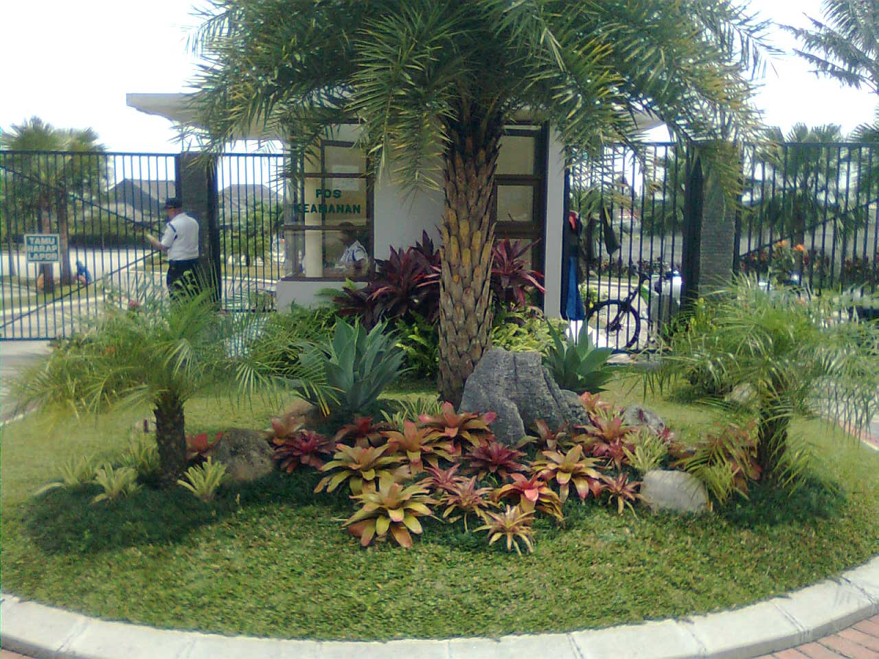 Palms landscape ideas for Lawn landscaping ideas