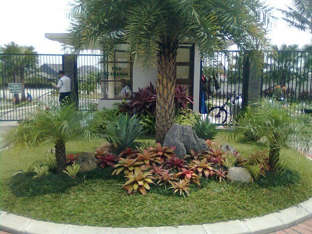 palms landscape ideas